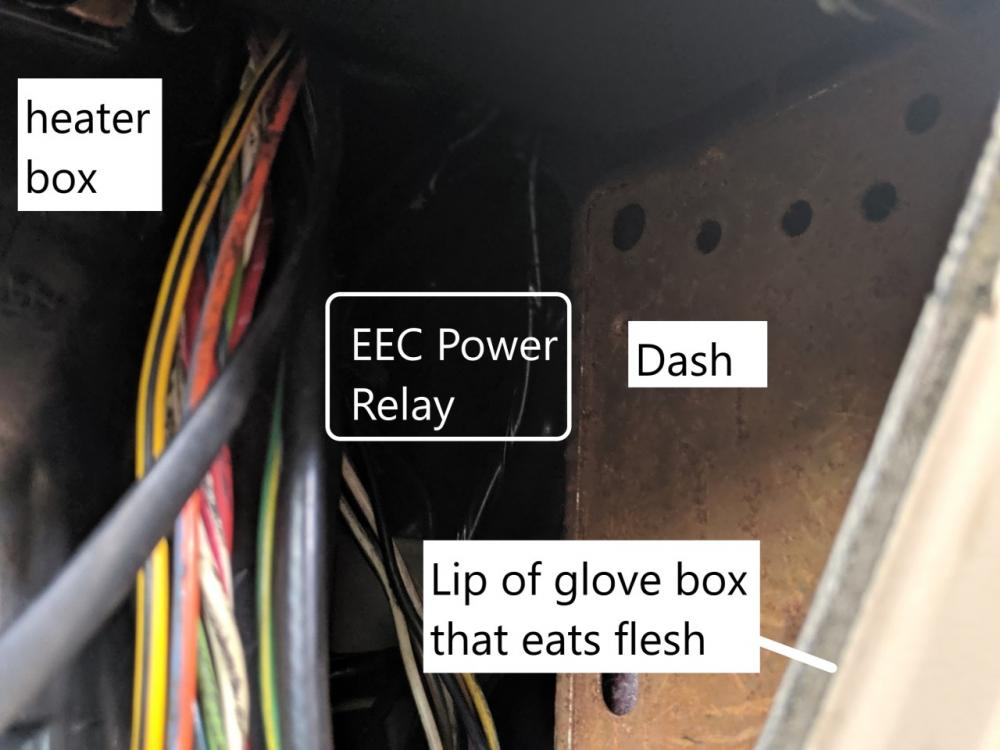 eec power relay wiring diagram wiring holley dominator efi ford mustang forums  wiring holley dominator efi ford